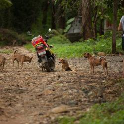 Maya Steinberger füttert Strassenhunde