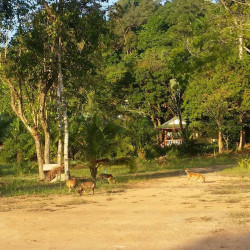113 Hunde werden durch Happy Dogs Koh Chang versorgt!