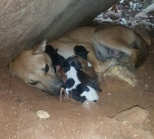 Bella hat ihre Jungen geboren
