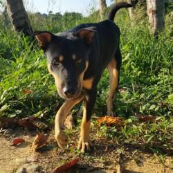 M. Eberle – Spende zu Tanja's und Marcos Geburtstag – für Strassenhund Lex