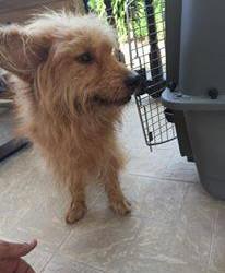 Toto beim Tierarzt