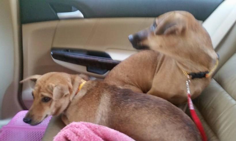 Und wieder 2 Hunde die kastriert werden konnten