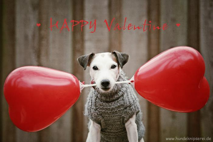 Wir Wünschen Allen 23 4 Beinern Einen Schönen Valentinstag