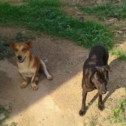 Bilder von den Bang Bao Tempel-Strassenhunden haben uns heute erreicht
