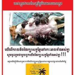 Erste grosse Kastrations-Kampagne auf Koh Chang ist gestartet