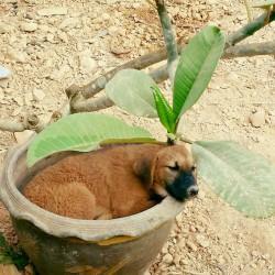 Mujong, 3 Monate alt sucht ein Zuhause