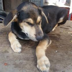 D. und S. Rohner – Spende für dort wo es die Strassenhunde am Nötigsten brauchen