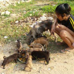 Im April konnten wieder 8 Hunde kastriert werden