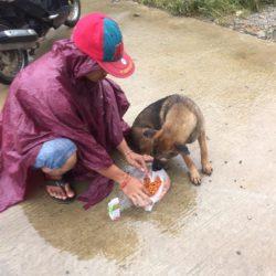 Trotz Nonstop-Regen werden die Strassenhunde betreut