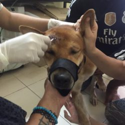 Farang beim Tierarzt