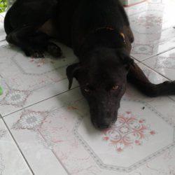 Bailey hat ein Beinchen verloren, dafür hat sie ein Zuhause gefunden