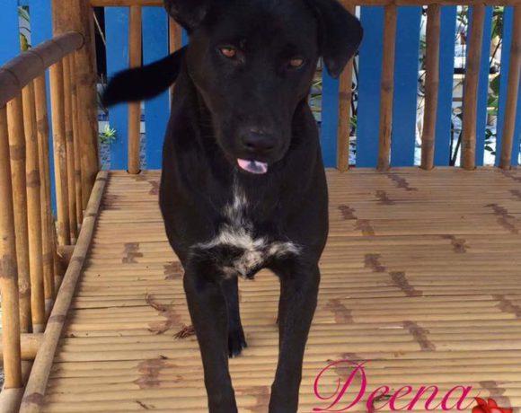 Deena – Shelter