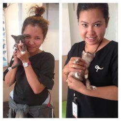 Happy End für Kätzchen aus dem Sack