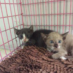 2 Kätzchen in Beutel an Tina übergeben