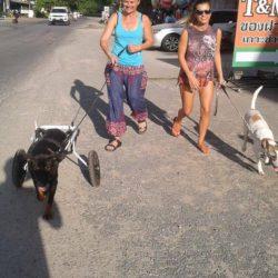 Rosco geht mit den ehrenamtlichen Helferinnen und mit Beatles spazieren