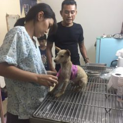 Kinder lernen Tierliebe