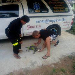 Hilferuf der Organisation Rescue