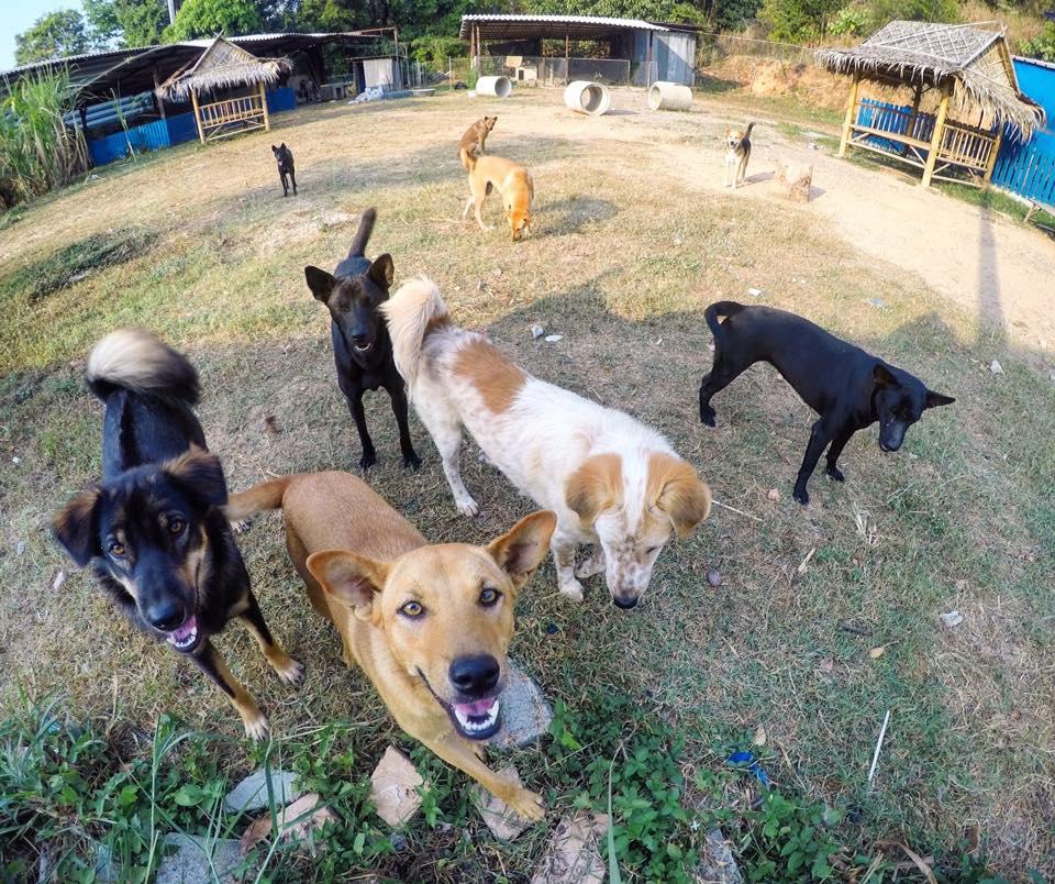 Klicken Sie auf das Bild um alle unsere Shelterhunde zu sehen
