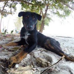 S. Breuninger – Spende für die Tiere auf Koh Chang