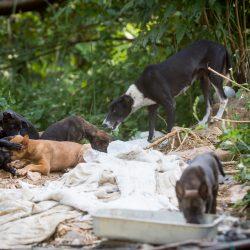 4 Pfoten Streunerhilfe auf Koh Chang wir freuen uns über die dringend benötigte Unterstützung