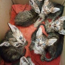 6 Kätzchen wurden ausgesetzt