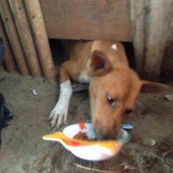 Tag der internationalen Streunertiere -Für Strassenhund Hubi mit Bisswunde gibt es ein Happy End