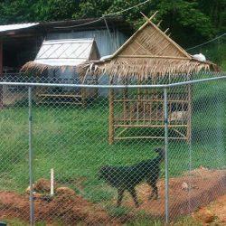 Neuer Pipiauslauf für Welpen und verletzte Hunde