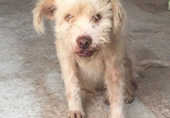 Ausgesetzter Strassenhund Marty sucht Paten