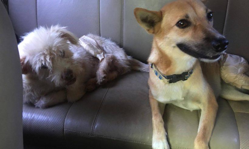 Marty und Bella zwei die sich mögen