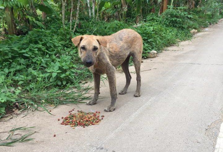 Maggie ein Strassenhund mit Räude hat Medikamente erhalten