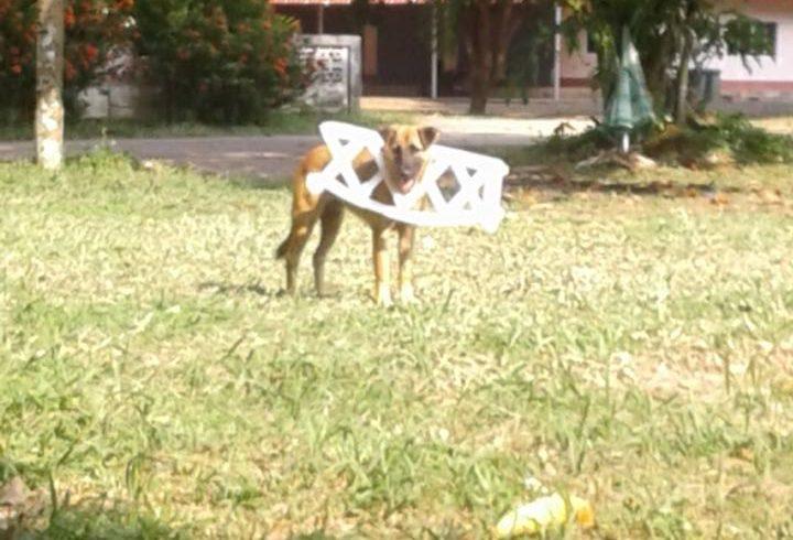 Mo befreit einen Hund aus einer gefährlichen Situation
