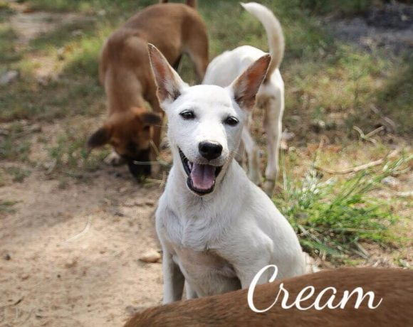 Cream – Fosterhome