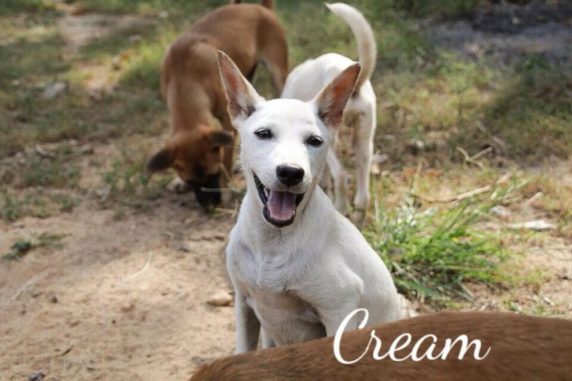 Cream – Fosterhome