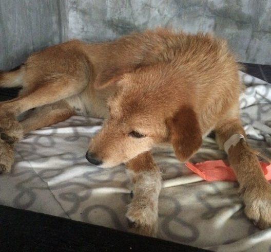 Thong benötigt eine Bluttransfusion/ leider ist er verstorben