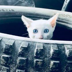 Süsses Kätzchen wohnt nun bei unserer Tierärztin