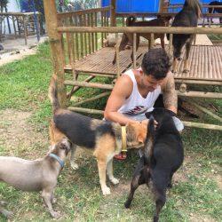Heute grüssen unsere Hunde auf Place of Hope