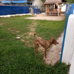 Ginger lebt nun auf Place of Hope bis er ein Daheim gefunden hat
