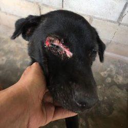 Dem Hund kann dank Ihren Spenden geholfen werden!
