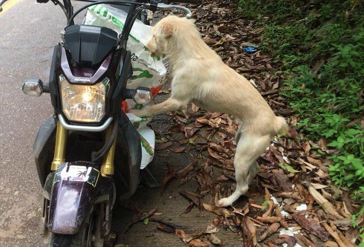 So werden unsere Leute von Happy Dogs Koh Chang erwartet