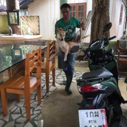 In den letzten 3 Tage konnten 26 scheue Hunde gefangen werden