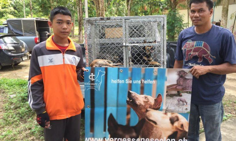 Kleine Kastrationsaktion im Oktober – Es werden scheue Hunde mit dem Blasrohr gefangen und kastriert