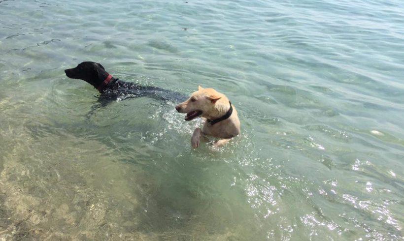 Rosco, Milk und Beth kommen in den Genuss eines Strandausfluges