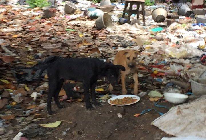 20-30 Müllhunde auf illegaler Deponie entdeckt