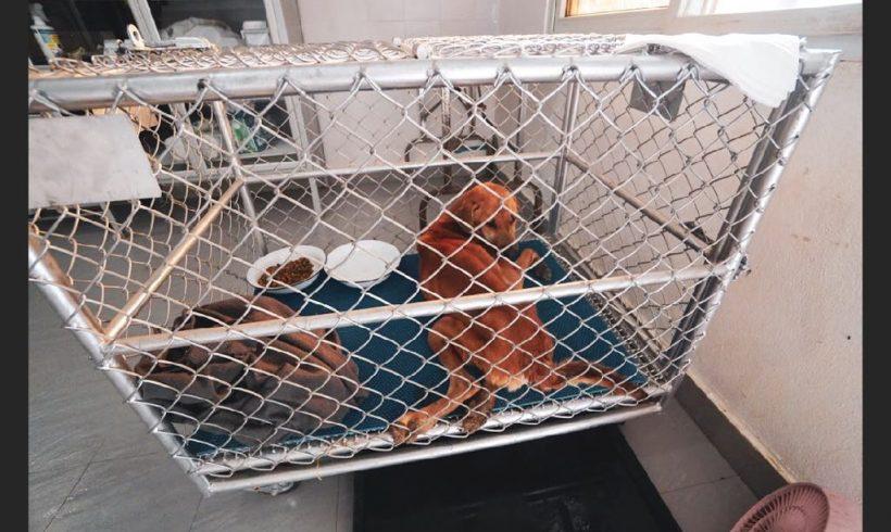 Der arme Som ist in den Kinik-Raum gezogen, bis er sich anfassen lässt