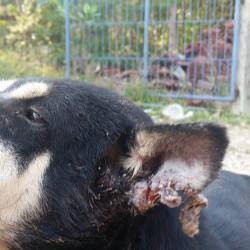 Patenhund Brother einer unserer Schützlinge hat Bisswunden