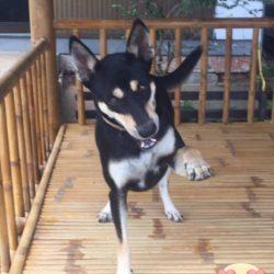 Gie Gie's Patenhund Sister gratuliert zum Geburtstag