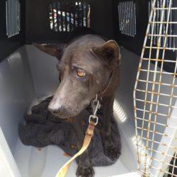 Strassenhund Don musste zum Tierarzt