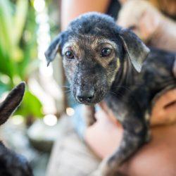Wie man im Urlaub Strassenhunden begegnet – Tipps von 4 Pfoten