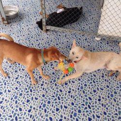 Spielzeug für unsere Shelterhunde