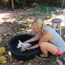 Welpenbaden freiwillige Helfer aus Schweden – wir sind dankbar